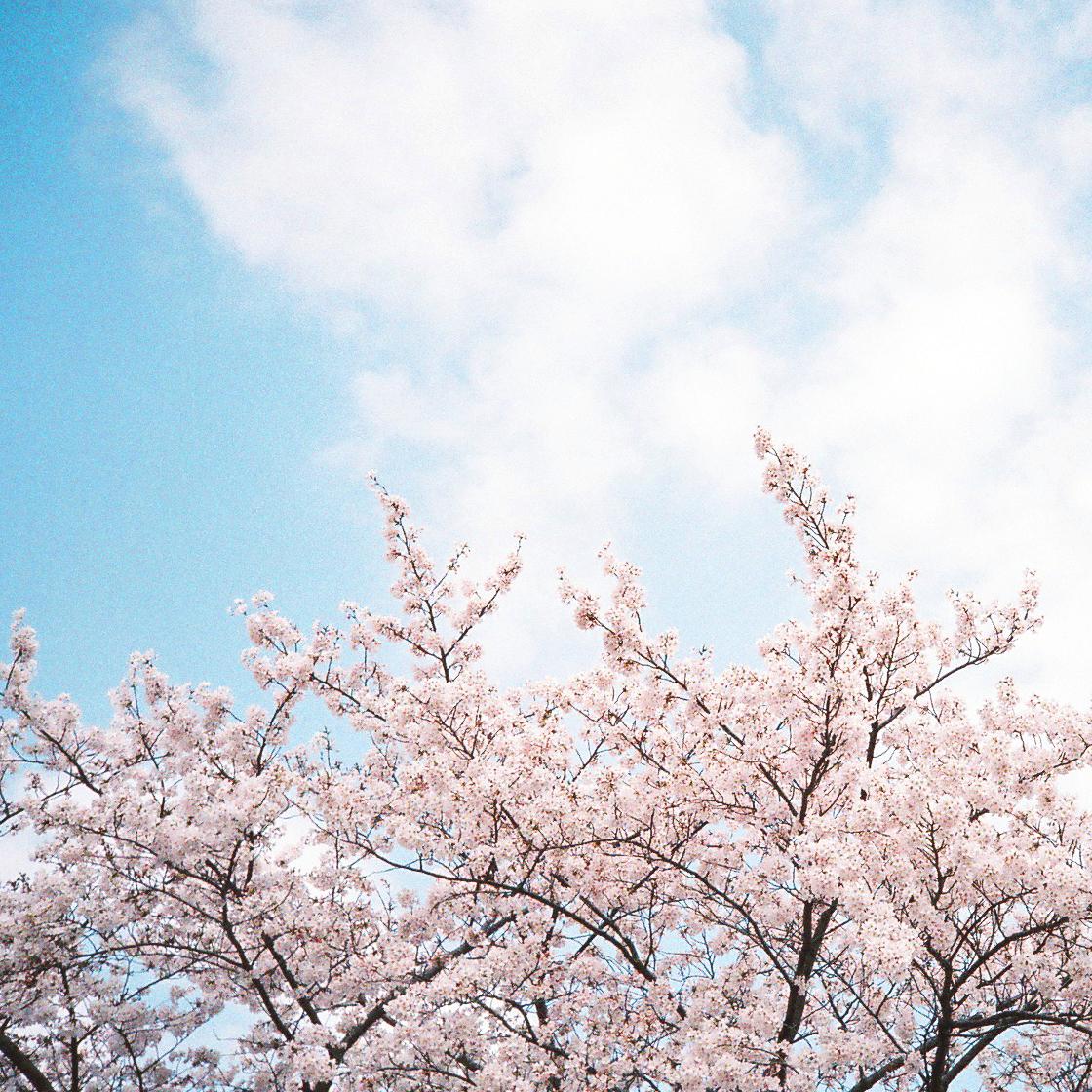 3月・4月 美容トピックスまとめ